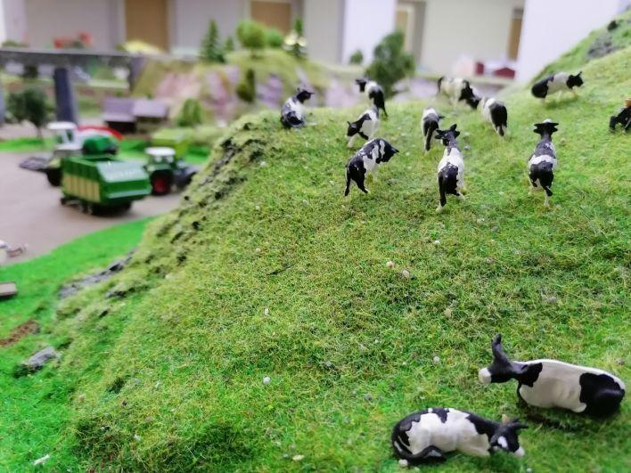 Коровы на макете наклоняют голову и выбирают сочную траву.