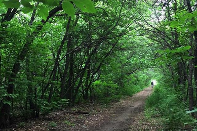 В Оренбурге создание парка на ул. Березка начнется с вырубки деревьев.