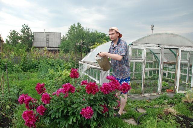 Чаще всего клещи присасываются на дачах и садовых участках.