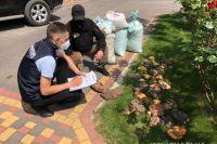 В Ровенской области правоохранители изъяли янтарь на 1,2 млн долларов
