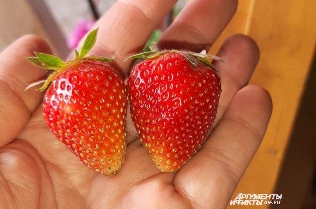 Первые ягоды созрели в конце мая.