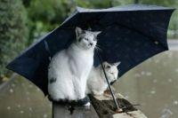 Синоптики сообщили, долго ли будут идти дожди