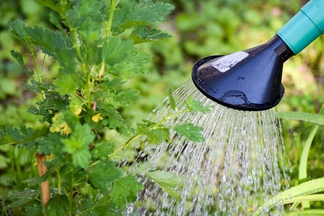 Полив сегодня роскошь, которую может себе не каждый, не имеющий доступа к технической воде
