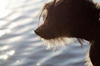 В ноябрьском микрорайоне Оболонь убили бездомного щенка