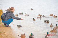 Бережное отношение к природе с детства. Тюменцы – о поправках в Конституцию