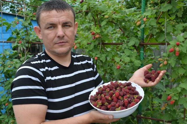 В прошлом году кусты были усыпаны ягодами, в этом - беда
