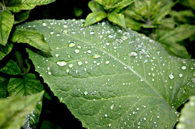 Дожди ожидаются 22 и 23 июня.