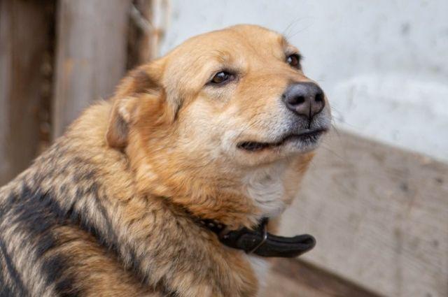 Красноярское общество защиты животных «Бездомный пес» выиграло грант.