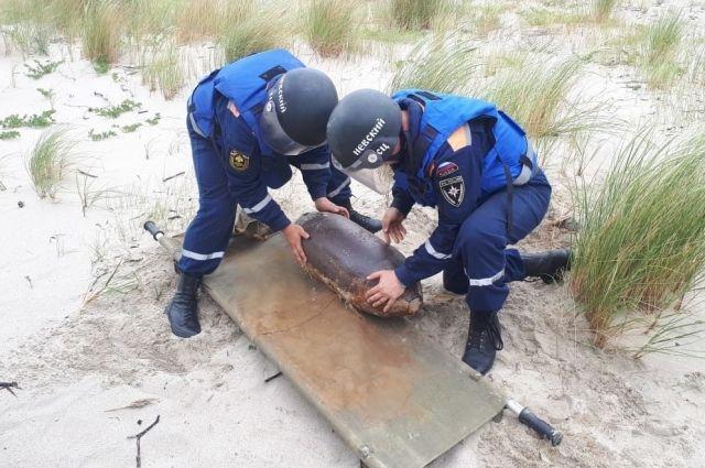 На Балтийской косе уничтожили две фугасные авиабомбы