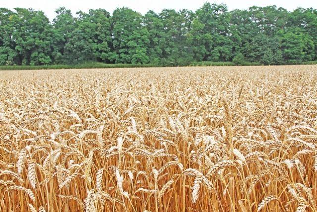 Главный экспортный ресурс - зерно