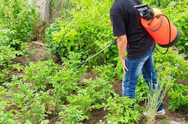 Спасти огород от вредителей.