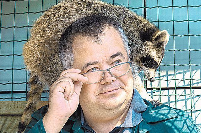 Андрей Горбань и любопытный енот.