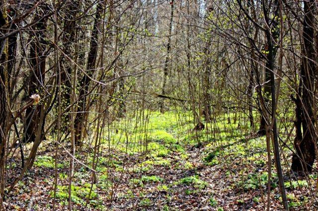 Поиски будут проходить в лесу в Соликамском районе.