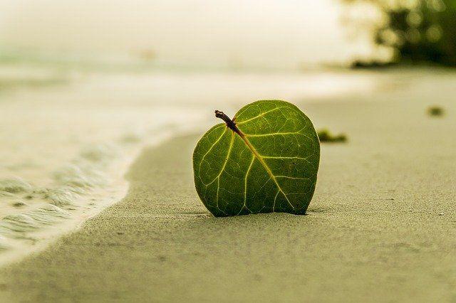В Тюмени готовят пляжи к открытию