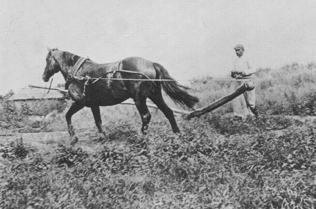 Русский крестьянин, около 1890 г.