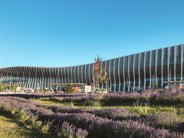 На привокзальной площади у нового терминала аэропорта расцвело более 19 тыс. кустов лаванды.