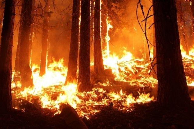 В России за минувшие сутки потушили 80 лесных пожаров