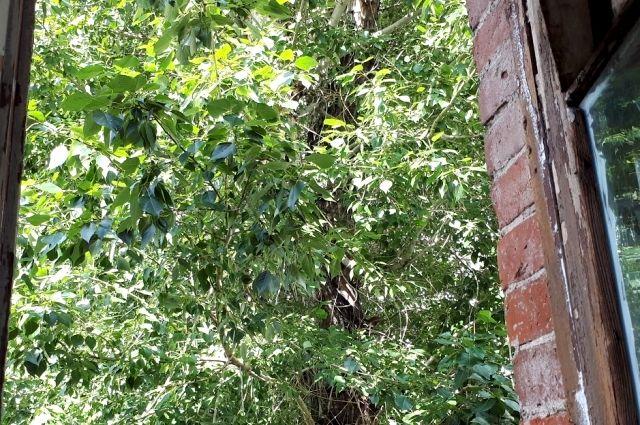 Тюменцам рассказали, что делать, если перед домом разрослись деревья