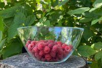 На Северном Кавказе сезон малины начинается в середине июня.