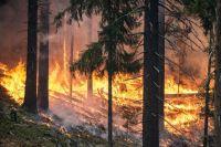 В настоящее время в семи районах зафиксированы 85 пожаров на площади 31,6 тыс. гектаров.