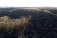 В Николаевской области выгорели пшеничные поля