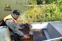 В районе ручья Масленка инспекторы заметили в воде лосёнка и приняли решение помочь.