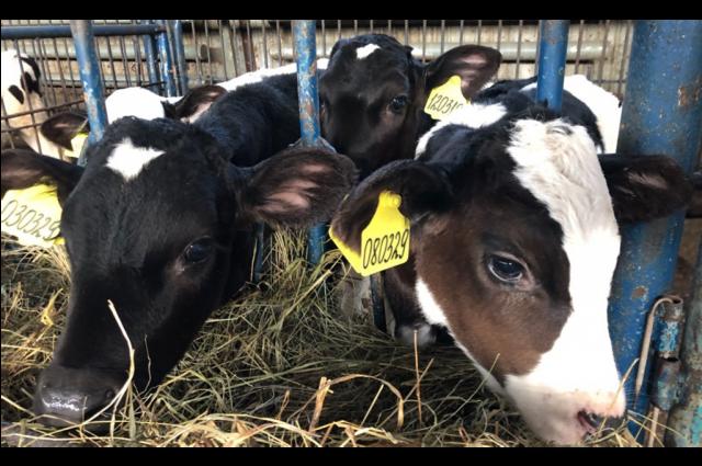В ЯНАО более 20 фермеров претендуют на грант «Агростартап»