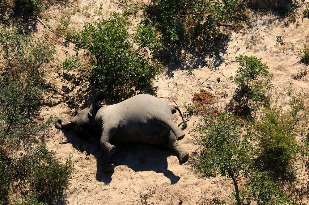 Для выяснения обстоятельств гибели животных в Серонге побывала министр окружающей среды Филда Нани Керенг.