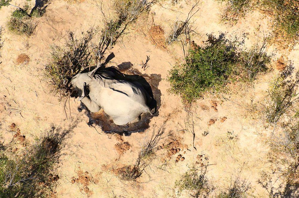 При дальнейшем расследовании было установлено, что сибирская язва и отравление людьми не являются причинами их гибели.
