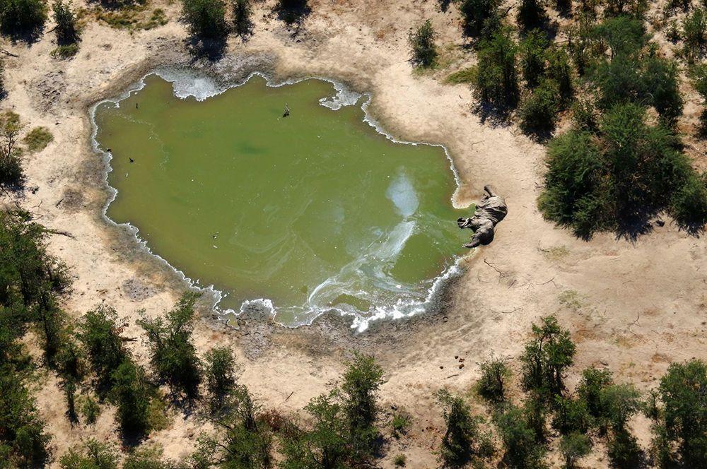 Случаи смерти слонов были зафиксированы в районах вокруг Серонга, Битши, Эретши и Гунотсоги.