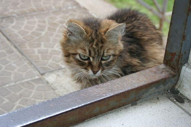 Заболевание выявили у кошки.