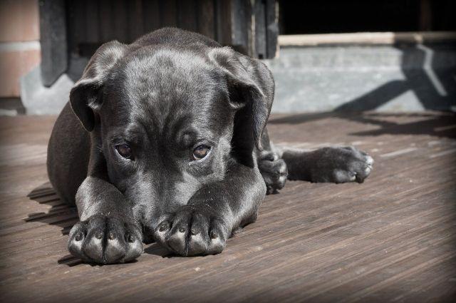 На место выехали спасатели. Они нашли собаку в роще, потом с использованием снаряжения для сковывания животных и слесарного инструмента освободили животное и отпустили.
