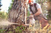 В Оренбурге продолжают разбираться с вырубкой деревьев.