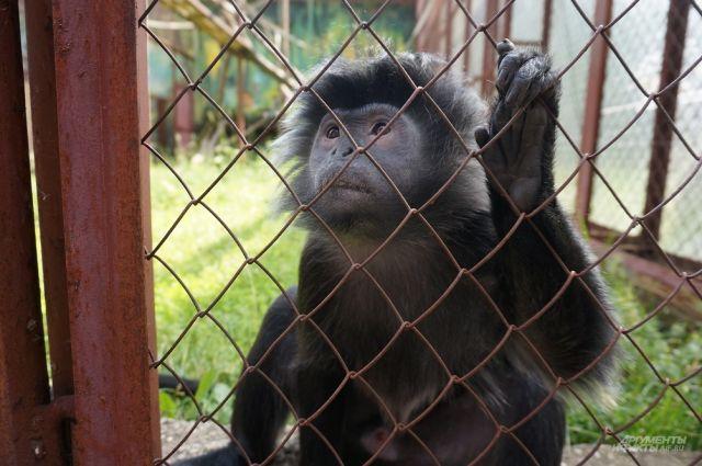 Обитатели зоопарка скучали без посетителей больше трёх месяцев