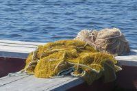 Мужчинам грозит 5 лет тюрьмы за 23 пойманных рыбы.