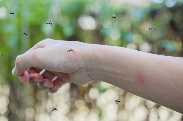 Дерматолог предупредила об опасности комариных укусов