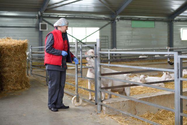 Реализован первый этап инвестпроекта по производству козьего молока