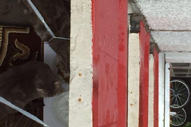 Максимум, что жильцы дома смогли сделать, так это соорудить приспособу из доски и веревки, приклеить ёмкости и спустить сверху, хотя бы взрослых котов покормить.