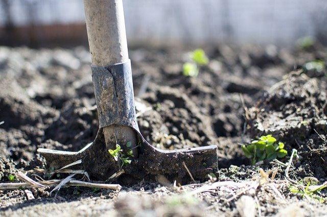 Сохранение статуса земель в СНТ Ольгино не решит проблему переезда «АБЗ №1»