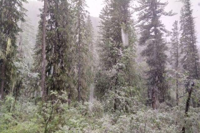 Свидетели необычного для лета явления  утверждают, что снег падал крупными хлопьями около восьми часов без остановки.