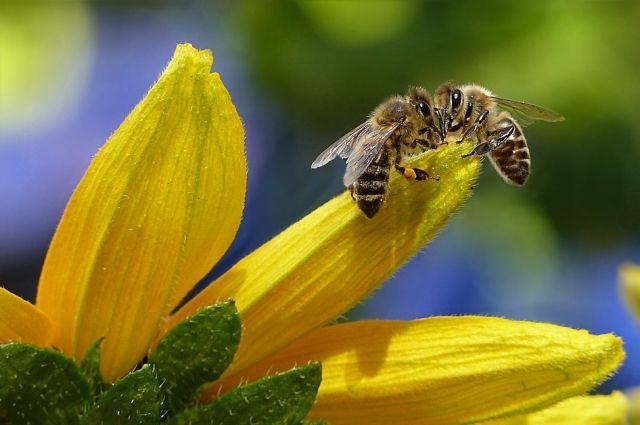 Рой пчёл перекрыл вход в подъезд жилого дома в микрорайоне Парковый, на Гатчинской, 18.