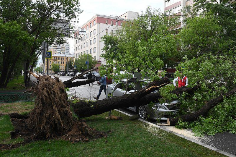 29 мая 2017 года на столицу России обрушился сильный ураган, в результате которого погибли 18 человек, и около 170 получили ранения. Стихия многих застала врасплох. Гибель и увечья причиняли, в основном, деревья и сорванные с места металлические конструкции, увернуться от которых просто не было шансов.