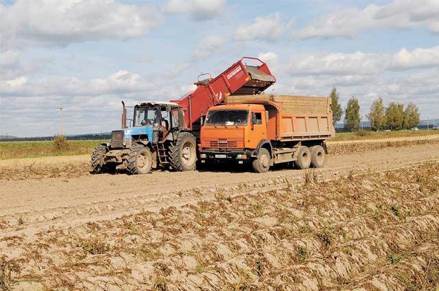 В этом году аграрии региона ждут хороший урожай.