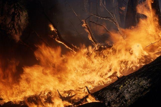 К 10 часам вечера огнем было охвачено уже порядка 300 гектаров леса.