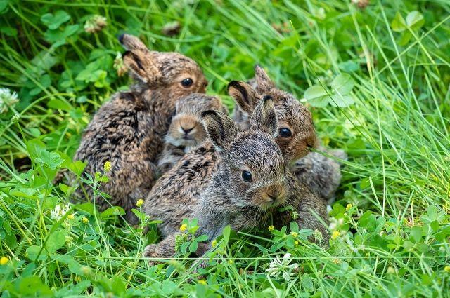Зайчатам уже почти месяц, зовут их Шашлычок, Салатик, Шпинатик, Редисочка и Пухляш.