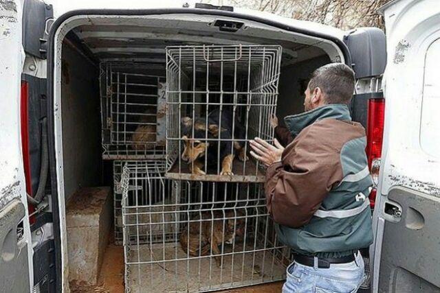 Работа по контролю за популяцией уличных животных в городе значительно усилилась.