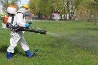 В этом году в Красноярске уже обработали от клещей 445 га территории.