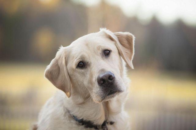 Названы самые популярные мифы о собаках, в которые пора перестать верить