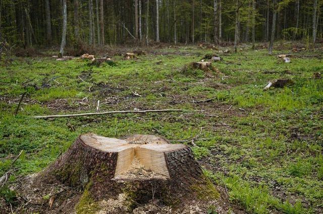 Бийской полицией возбуждено уголовное дело по факту возможных незаконных рубок деревьев.