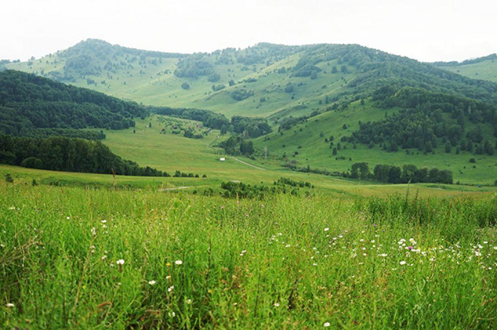 Удивительно в алтайской природе и то, какой она бывает разной. Прохладная, строгая и синяя, или же тёплая, мягкая и густо-зелёная...